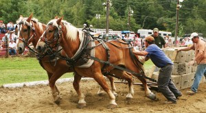Vermont - Horse Pulling Contest love