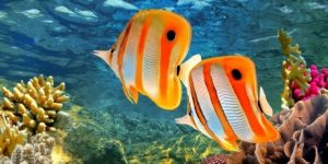 fish on Great Barrier Reef