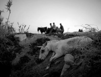 Donkey killed by IDF in El Atatra