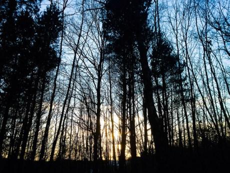Pollok Trees