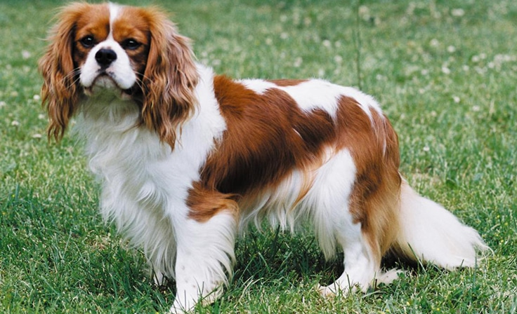 top 10 most expensive dogs