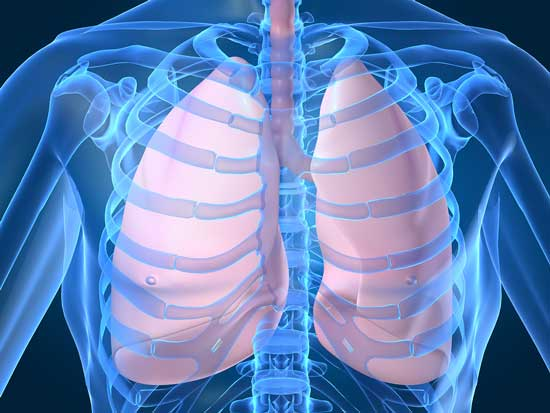 Net Worth of lungs