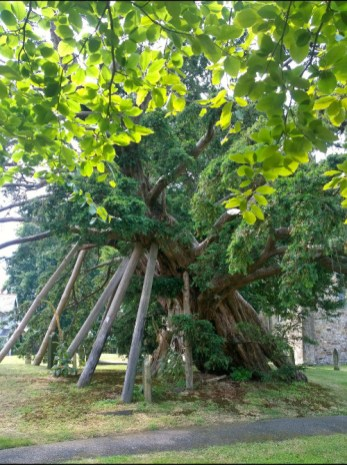 Rotherfield Tree