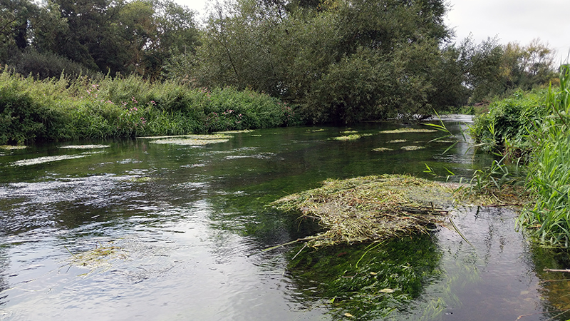The Great Stour River Meadows