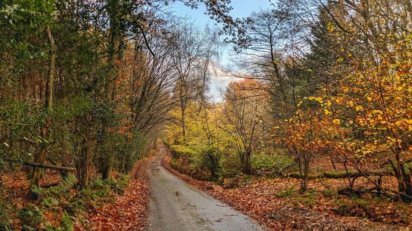 Weald Lane