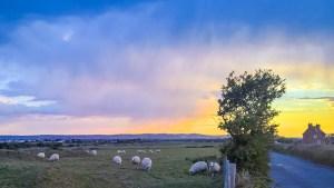 Pevensey Marsh