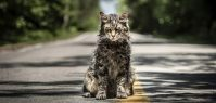 "The Eight Cats Who Played Church in 'Pet Sematary' Were ""A Pack of Divas"""