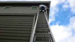Climbing the Ladder: The Corporate Myth