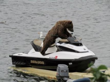 Do not loan your boat to a grizzly. Even if it is just a jetski.
