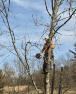 Expert in Tree by Rick Coplin