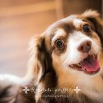 【ペット撮影会】今年は戌年!かわいいワンコ写真、撮りましょ♪