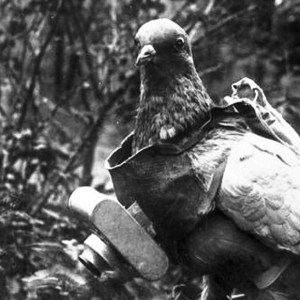 Group of pigeons, trained to return to the front lines, were dropped into occupied areas together with the parachutists and were kept there until soldiers had messages to send back. WWI Riddles Now