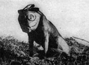 During WWI, Dogs were used as messengers and carried orders to the front lines in capsules attached to their bodies Riddles Now
