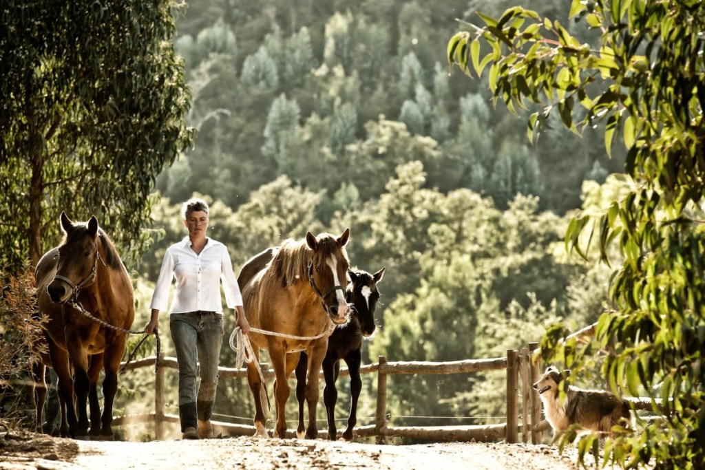 Riding Holiday Portugal