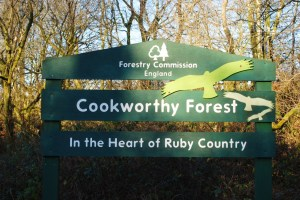 Welcome to Cookworthy Forest