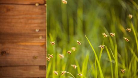 """保时捷莱比锡工厂里的小蜜蜂们 """"告捷"""" 首个产蜜季节"""