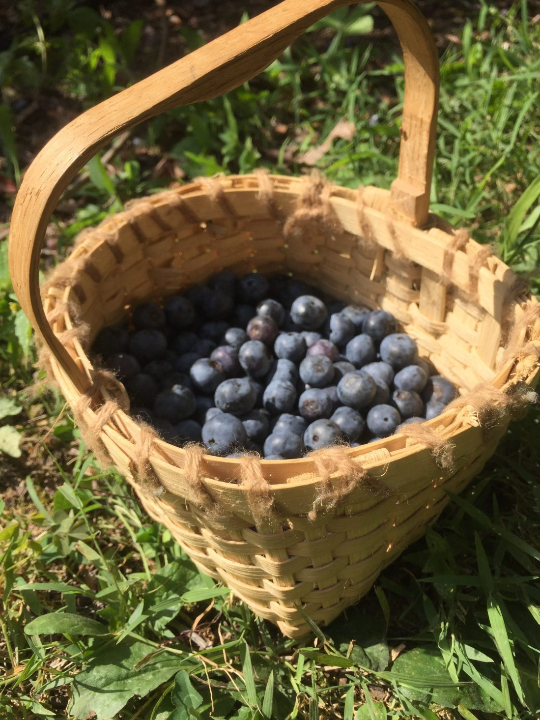 berry picking with kids