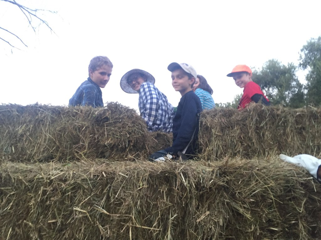 riding the hay wagon.  that's what friends are for
