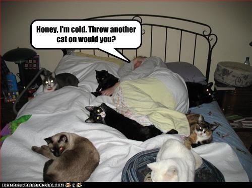 Cats as bed Warmers