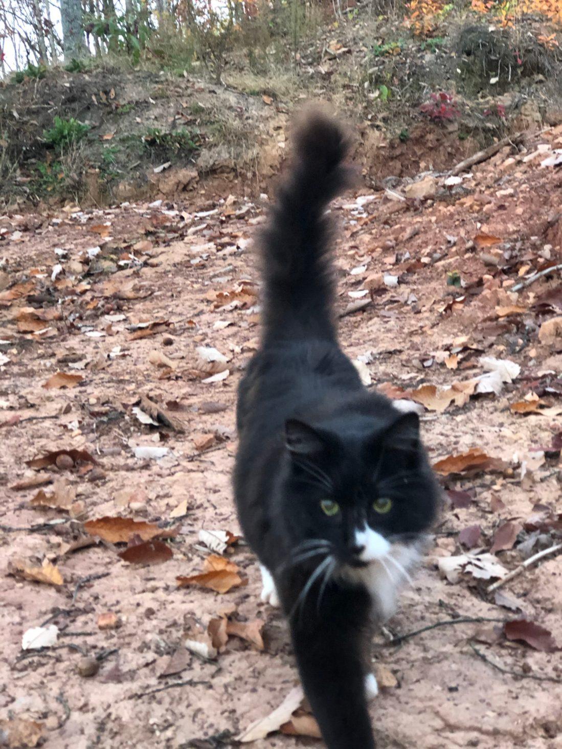 Ridge Haven Homestead cat