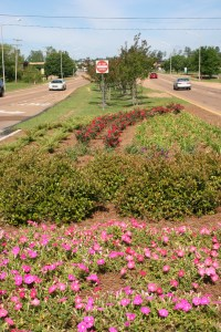 The City of Ridgeland recently landscaped the medians along Lake Harbour Drive.