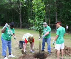 tree planting KRB IMG_0742