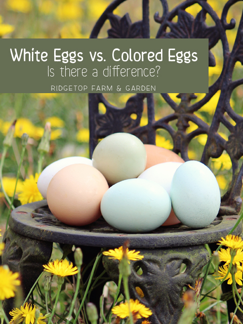 White Eggs vs Colored Eggs