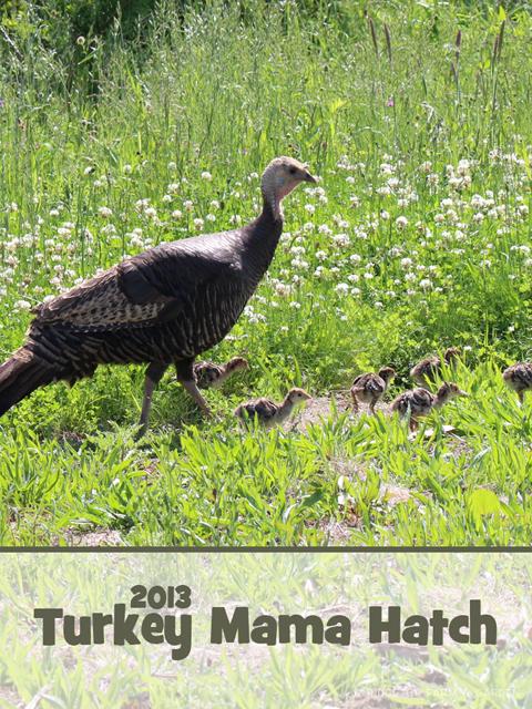 2013 turkey mama title sized