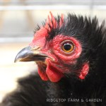 PNPA Spring Poultry Show 2013
