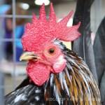 Oregon Fall Poultry Swap 2013