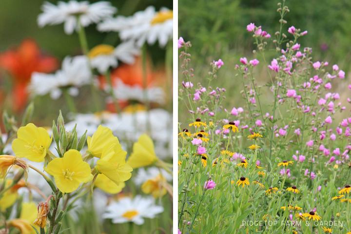 Aug 2012 Bloom Day back yard