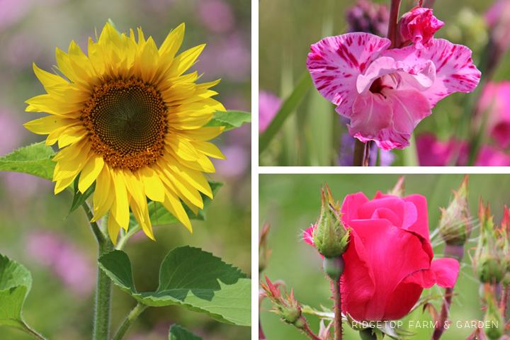 Aug 2012 Bloom Day bird village3