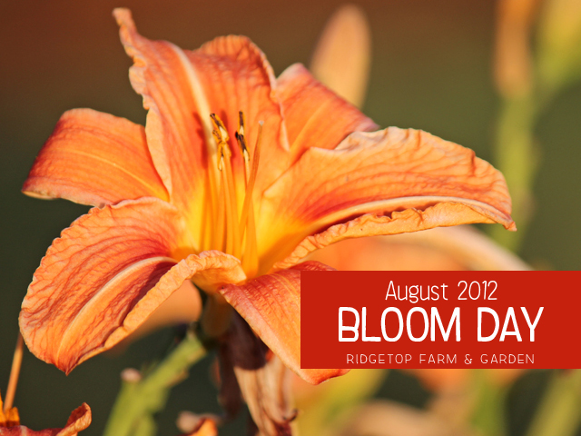 Aug 2012 Bloom Day title