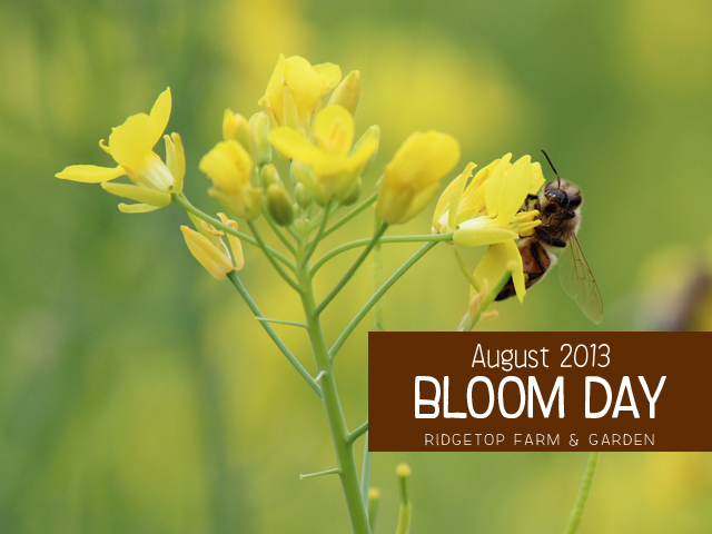 Aug2013 Bloom Day title