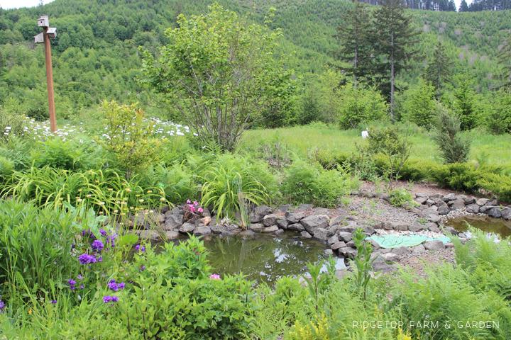 BIrd Village Pond May 2015