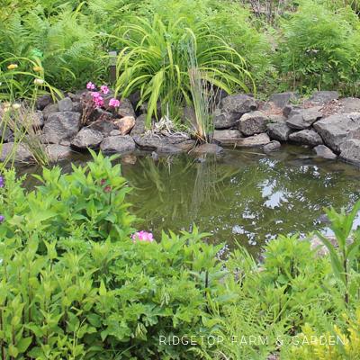 Bird Village Pond