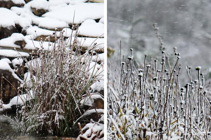 Dec 2012 Bloom Day pond1 back yard