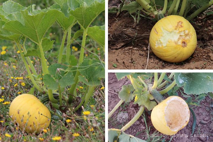 Garden Grows Aug2014 Out2