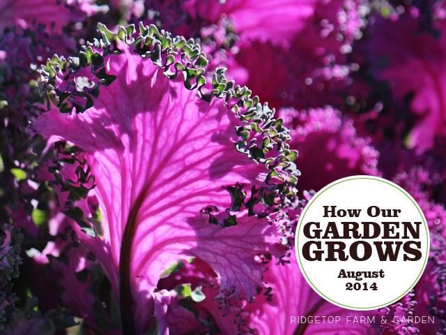Garden Grows Aug2014 title