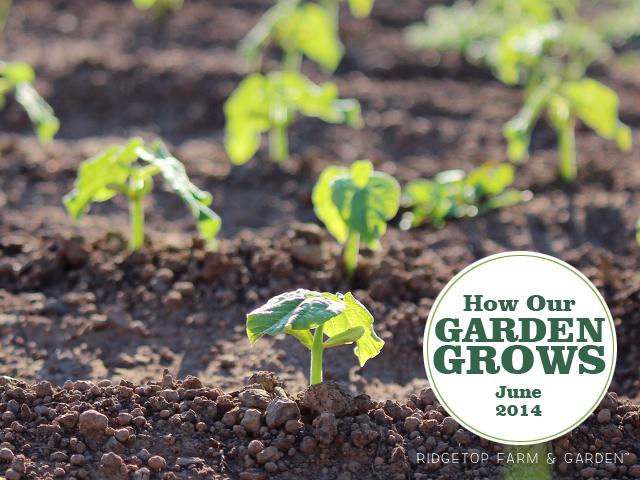 Garden Grows June2014 title