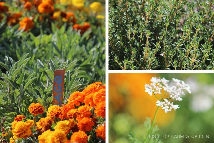 Garden Grows Sept2014 1
