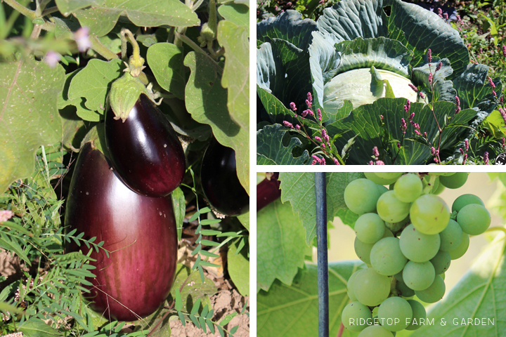 Garden Grows Sept2014 5