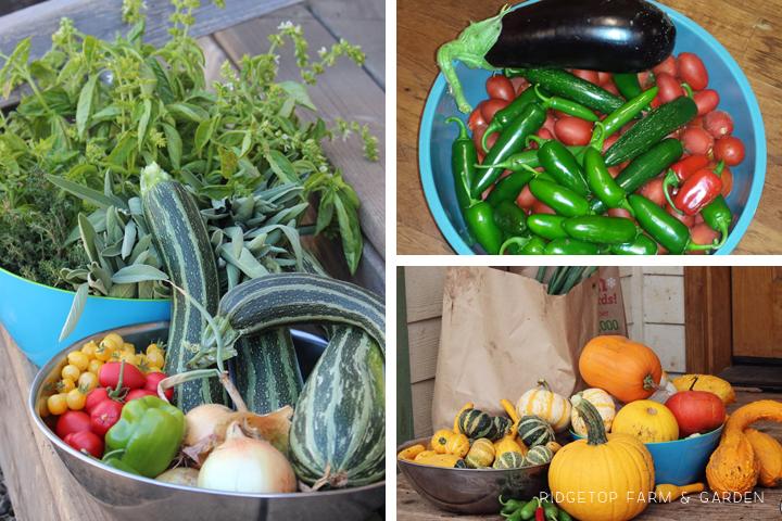 Garden Grows Sept2014 collecting1
