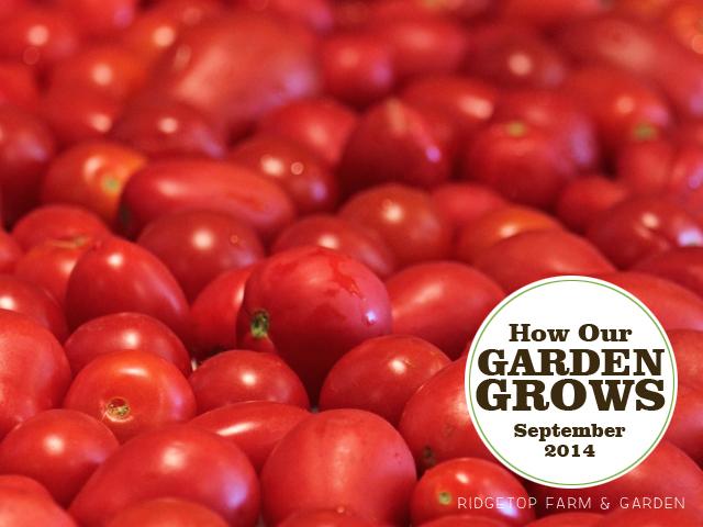 Garden Grows Sept2014 title