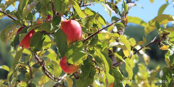 Garden Grows Sept2014 trees1