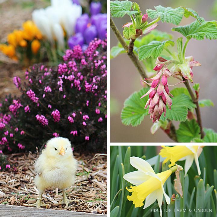 Mar2013 Bloom Day Bird Village