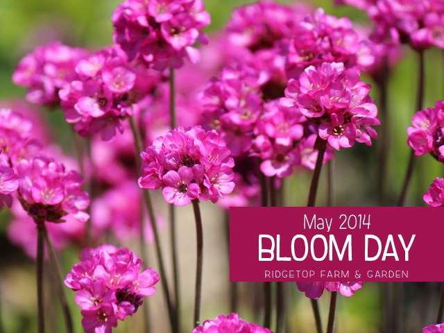 May 2014 Bloom Day title