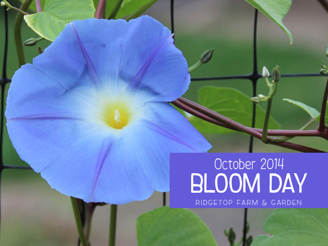 Oct 2014 Bloom Day title