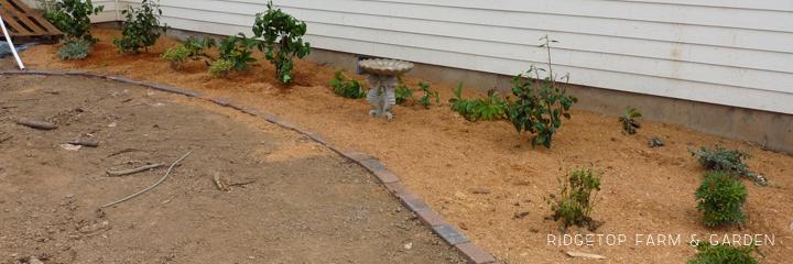 Shade Garden 2009