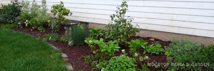 Shade Garden 2012
